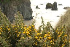 #cliff coast #coastline #wildflower