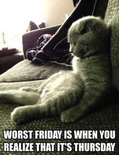 worst friday, sat cat, funny photos