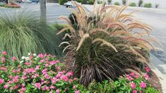 16 Meilleures Images Du Tableau Jardin Graminees Landscaping Lawn
