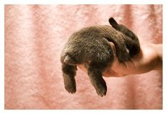 Bunnies are just the cutest!
