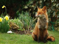 Content Mrs Fox.
