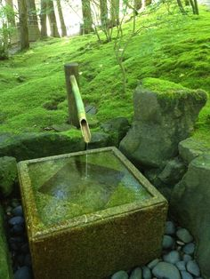 Portland Japanese Garden, Water Features In The Garden, Garden Water, Color Psychology, Garden Inspiration, Green Colors, Vases, Yard, Yellow