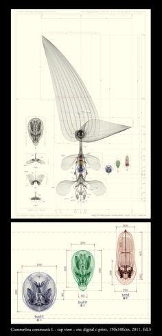 """""""Inorganic Herbairum"""" by Macoto Murayama"""