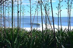 Byron Bay Photo