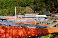串柿の里干し柿:和歌山 - Google 検索