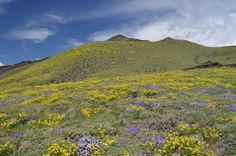 Etna in the spring (end of May)