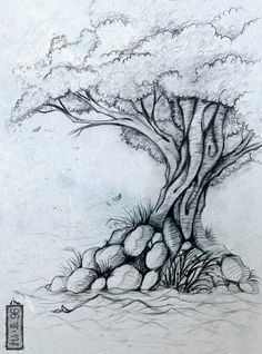 drawings of trees images