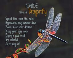 Passing along a few words of wisdom for the day. Advice Quotes, Life Advice, Good Advice, Fernandina Beach Florida, Optimism Quotes, Animal Spirit Guides, Oracle Cards, Nature Quotes, Self Help