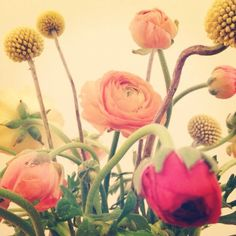 Ranunculus and craspedia