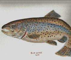 8 by 10 inch watercolor of a Brown Trout