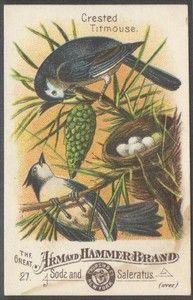 Arm Hammer Baking Soda Crested Titmouse No 27 Bird Series Victorian 1880