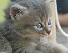 This kitten looks like my cat when he was a kitten!
