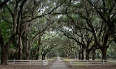 Wormsloe | Flickr - Photo Sharing!