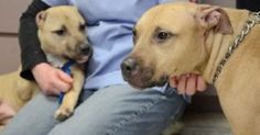 Mother of severely abused puppy needs a home