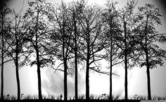 Trees Silhouette HD Wallpaper