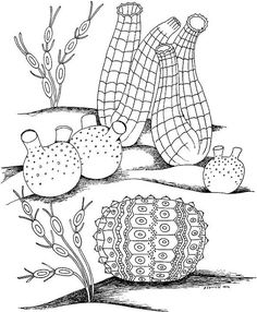 Nice Ocean Plants Coloring Pages 97 Seascape Ocean Coloring Page