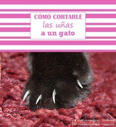 Es muy fácil cortarle las uñas a tu gato para que deje de arañar los muebles.🐈 Podrás hacerlo tú mismo con el método que te mostramos.😘🐱💙