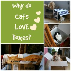 PawCulture, pet lifestyle, why cats like boxes, BlogPaws, @pawculture #PawCulture, #ad