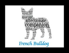 """Traits of the French Bulldog Often described as """"a clown in the cloak of a philosopher,"""" the French Bulldog originated as, and continues to be used as a companion dog. The development of the breed is"""