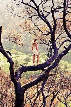spirit in a tree