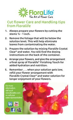 Flife What Is Flower Care Quick Tips For Cut And Handling