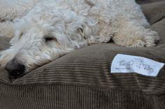 Dog beds  - Alpaca and Sheep's Wool  - Free shipping - North Island