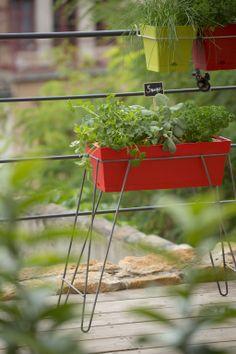 1000 images about jardin potager balcon on pinterest - Potager sur balcon terrasse ...