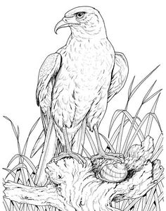 wildlifedepartment coloring pages - photo#45