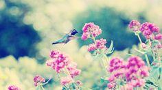 Awesome-Hummingbird-Wallpaper.jpg (1920×1080)