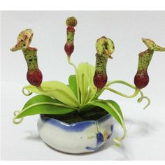 NEPENTHES  ORCHID W POT MINIATURE CLAY FLOWER PLANT GARDEN WEDDING GIFT    FA58