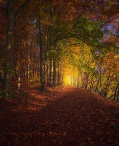 Painted Forest - Autumn in the foothills of Bavaria, Germany.