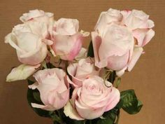 Secret Garden roses - my new dusky pink rose to use !!