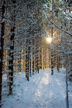 Life is Mysterious � Snow Forest, Sweden
