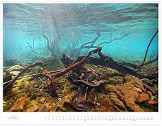 Image result for river aquascape
