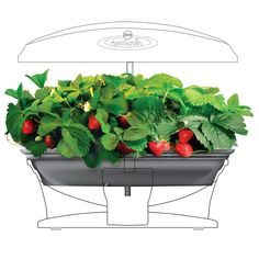 AeroGarden Grow Bowl
