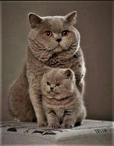 #catsandme #cats #doghealthcareblog #rhodesian #ridgeback #christmas #woof #long #sleeve #tees #Dogfashion #Dogs #Dog #SunfrogTshirts #Sunfrogshirts #shirts #tshirt #hoodie #sweatshirt #fashion #style