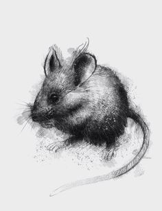 House mouse sketch, prints available for sale on Etsy http://etsy.me/1rARc0J