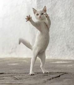 직립보행 고양이