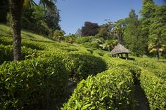 Living puzzles and sunny days at Glendurgan, Falmouth, Cornwall