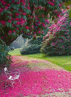 Jardin Rosado