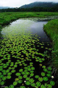 4nimalparty:    Green world (by miwa**)