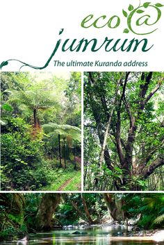 Magnificent rainforest, outstanding tourist attractions and the incredible wealth of native wildlife are just some of the things that bring people to the Cairns region every year. When you live at eco@jumrum these can be part of your everyday life. http://www.ecojumrum.com.au/lp/ #ecojumrum #ecoliving #treechange