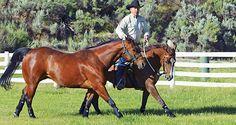 Ponying a Horse