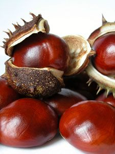 Chestnuts #chestnuts #fruit #栗