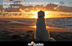 You want a friend in Washington? Get a dog!