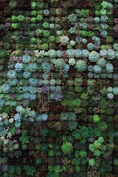 100+ Succulent Pictures | Download Free Images on Unsplash