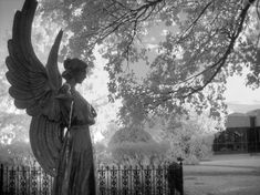 I captured this lovely angel at the Missouri Botanical Garden in St. Louis, MO using my infrared camera. Bring a little Zen in your home. Missouri Botanical Garden, Botanical Gardens, Infrared Photography, White Gardens, Photo Tree, Perfect Photo, Great Photos, Black And White Photography, Fine Art Photography