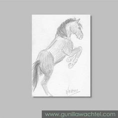 Daily Drawing 19 - ACEO horse pencil sketch