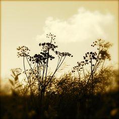 august   Liivia Sirola on Flickr