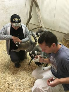 Lemur feeding Houston County Fair 2016